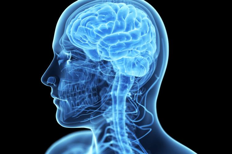 le-cerveau-humain-et-ses-fonctions comment-fonctionne-le-cerveau-humain