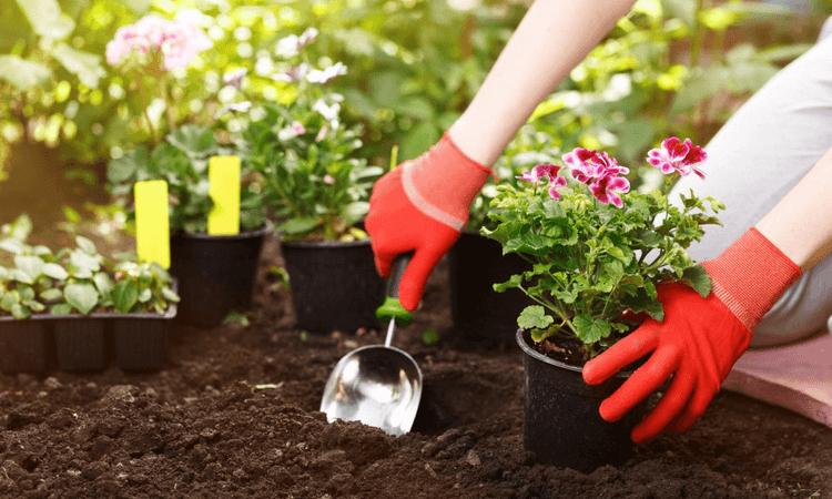 jardinage-maison printemps-2019